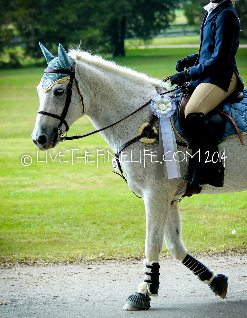 I Will Shoot Your Horse:: Horse Photography via livethefinelife.com