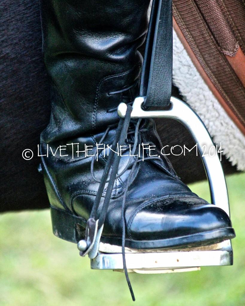 I Shot your Horse, Photo ©livethefinelife.com