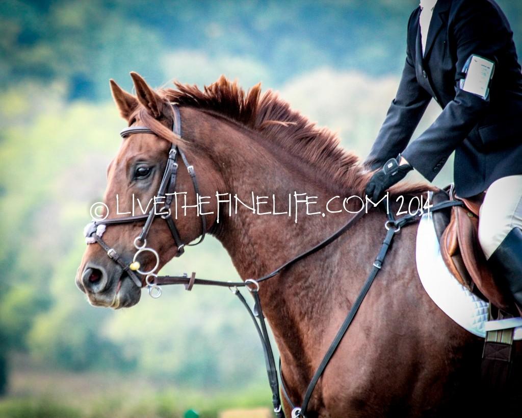 I Shot Your Horse, ©livethefinelife.com